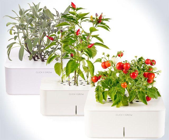 Click Grow Smartpot Plants Hage 400 x 300