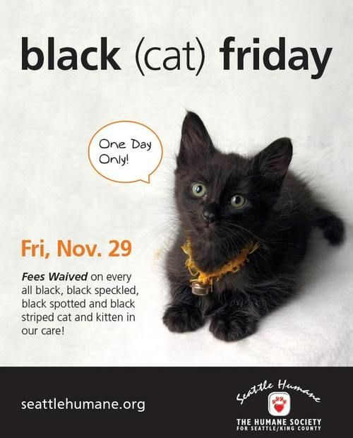 Seattle King County Blackfriday 2013 Adoption Cat Pet Blackcatsrule Link To Photos And Descriptions Of Cats Humane Society Black Cat Black Friday