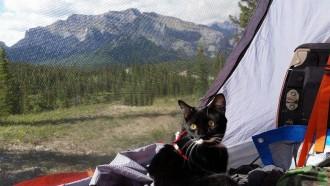 Photo of Gato canadiense que acampa rocas & # 39; stache – Cat Tales Archives – Página 5 …