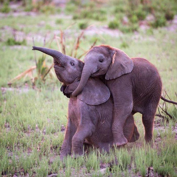 Смешная картинка слон