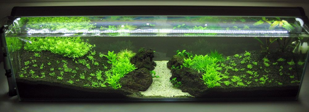 Image Result For White Cloud Minnow Tank White Cloud Minnow White Cloud Clouds