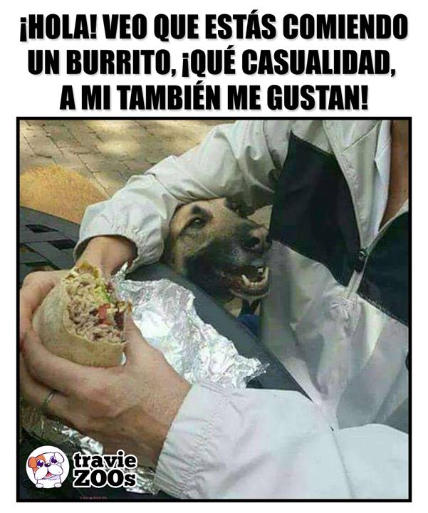 Que Curioso Son Mis Favoritos Memes De Perros Chistosos Humor De Animal Meme Gracioso