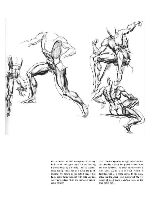 TORSO--- Dynamic Figure Drawing by Burne Hogarth, pg.47 | The ...