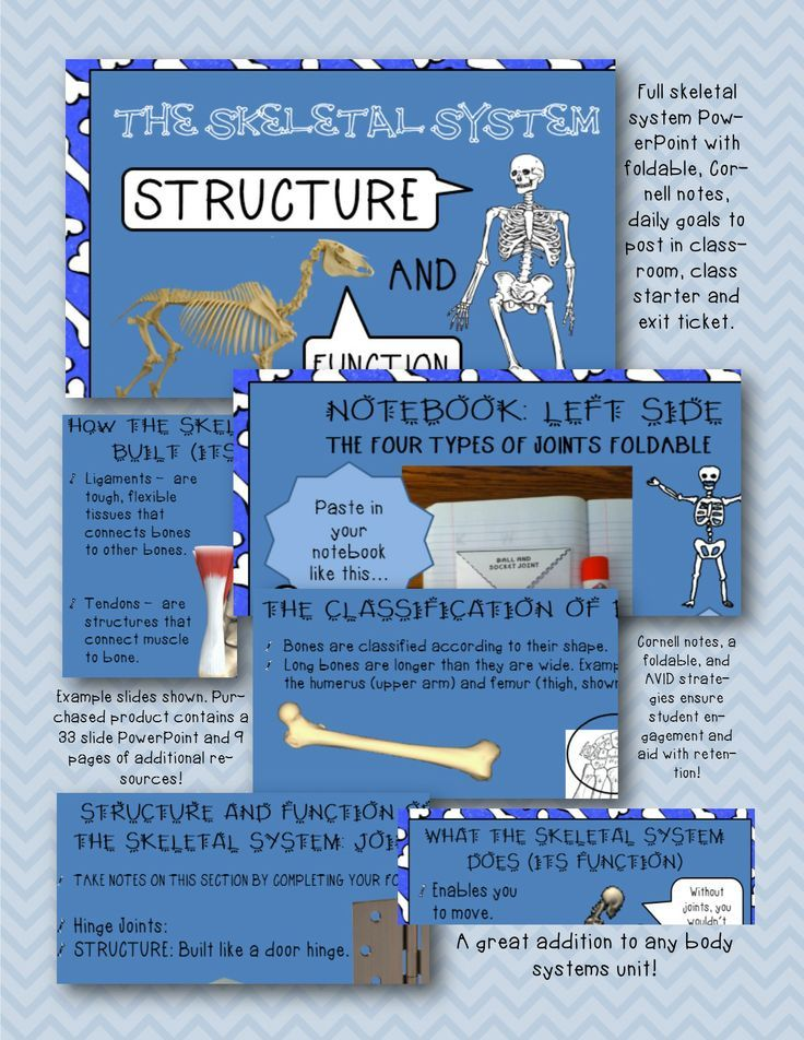 Skeletal System Pwpt Foldable Interactive Notebook Notes 5th 6th 7th