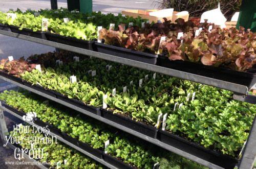 Fall Vegetable Gardening Tips - www.thefarmgirlgabs.com