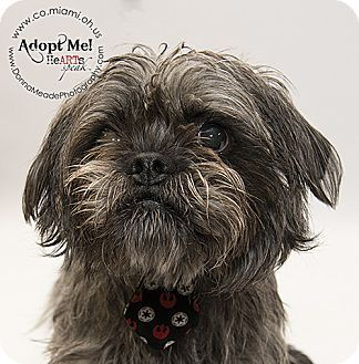 Ohio Urgent Sully Is A 1 2yo Shih Tzu Mix Who Brought In Stray