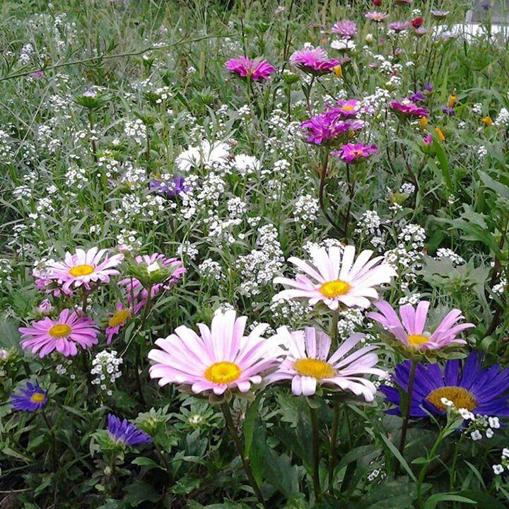 57 Amazing Beautiful Garden Ideas Inspiration And: Wild Flowers, Flower Photos