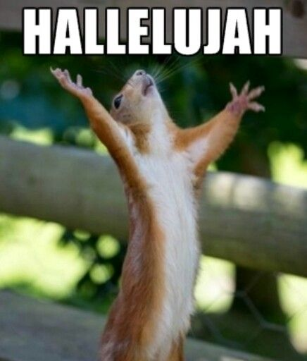 Hallelujah squirrel!   Happy squirrel, Cute animals, Funny animals