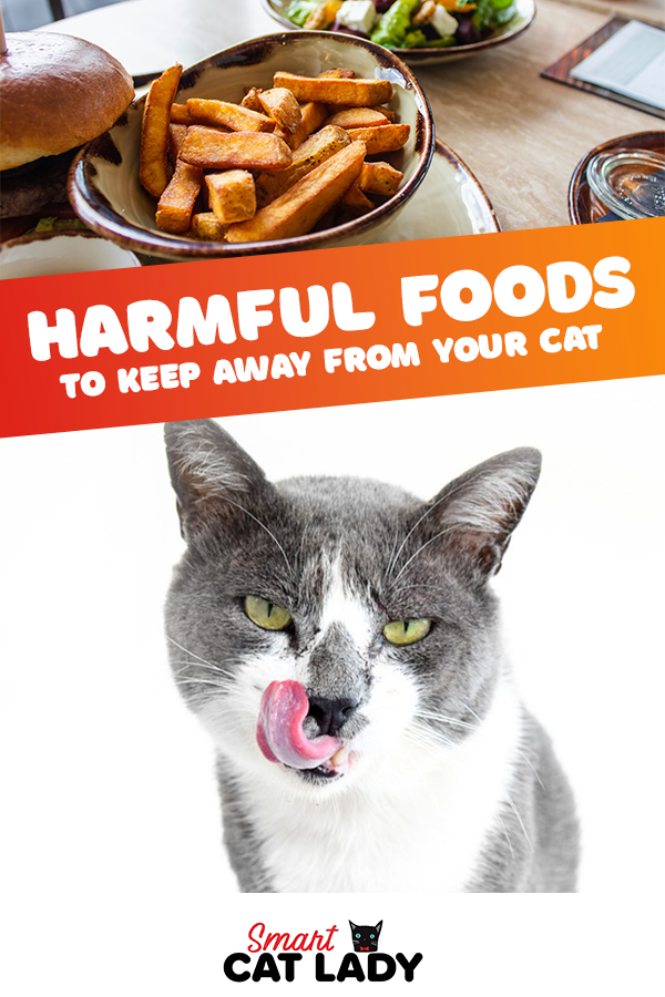 Harmful Food to Keep Away from Your Cat Cat care tips