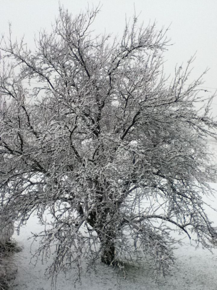 Tree in winter!