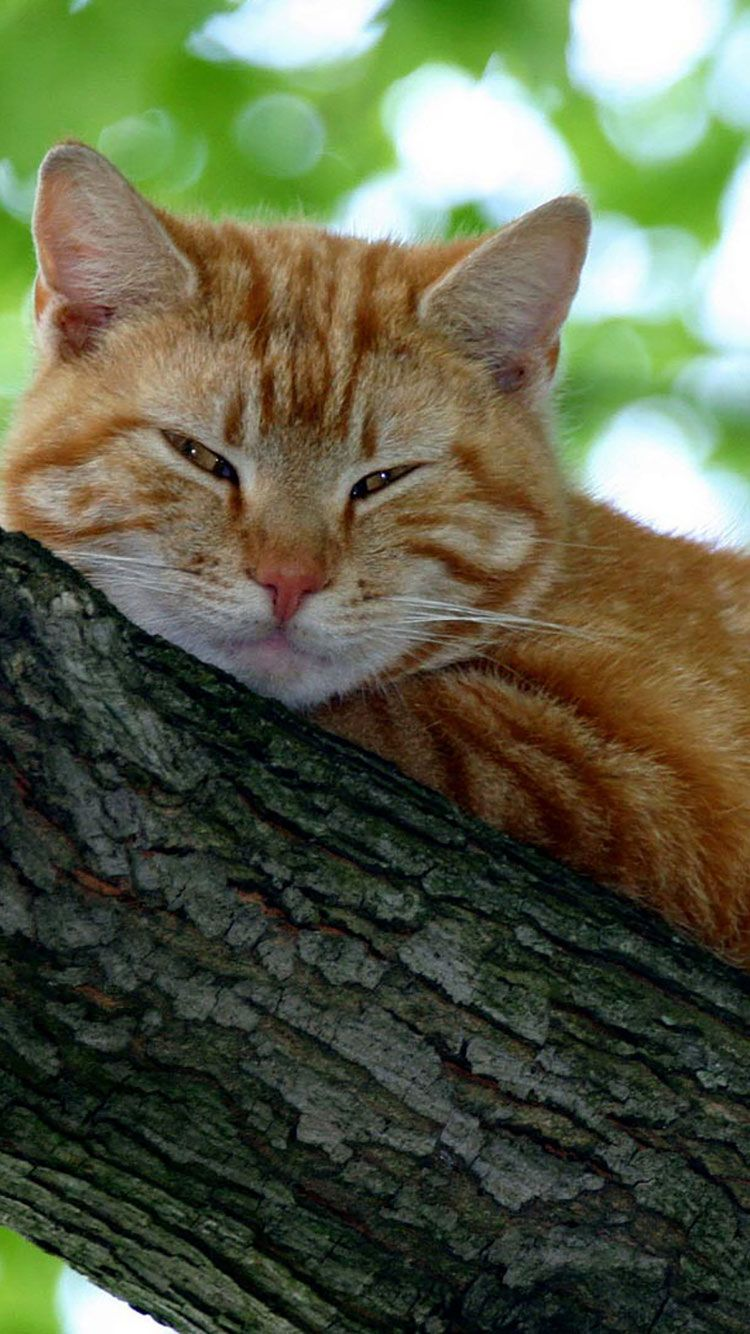 50 HD Cat iPhone Wallpapers | Cats iphone, Cats, Cute cats