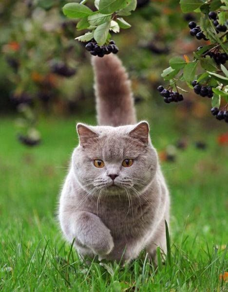 Beautiful Katzen Tiere Wilde Katzen