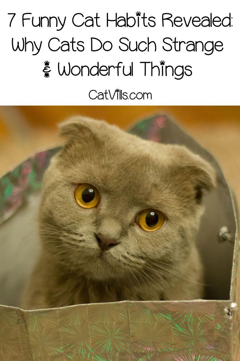 best cat food for indoor cats canada
