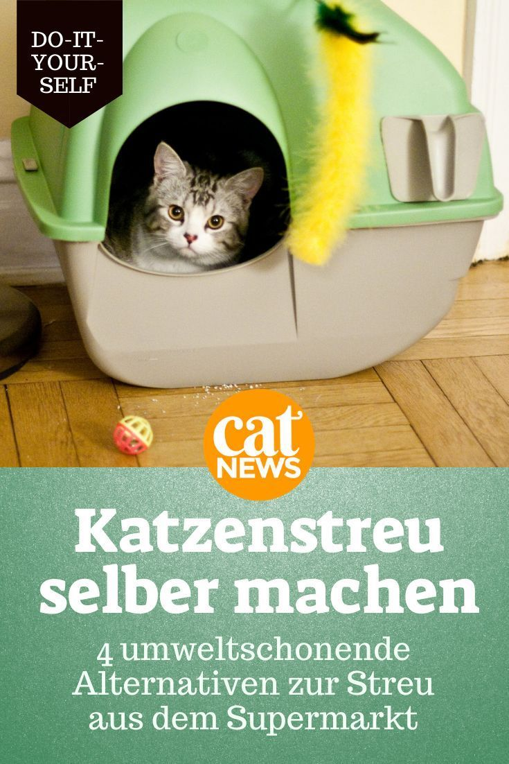Katzenstreu selber machen, Katzen Gesundheit, Tipps