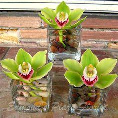 flower arrangements rocks - Google Search