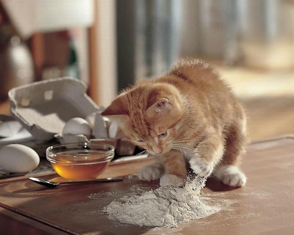 kitty decided he should help make pancakes!