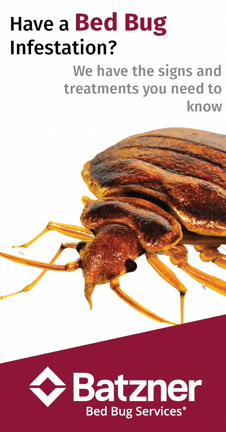 Learn how to identify a bed bug infestation and what do