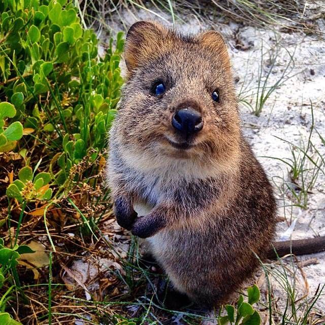 Do You Have A Favourite Western Australian Animal Children Will Be Given The Opportunity To Learn About An Iconic Native Animal And Make Cute Animals