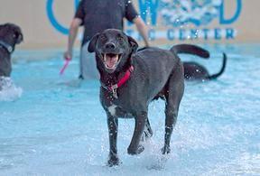 Jackson having the best time splashing around!