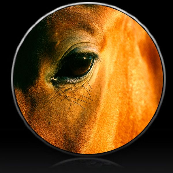 Horse Eye Spare Tire Cover Spare Tire Covers Custom Tire Covers