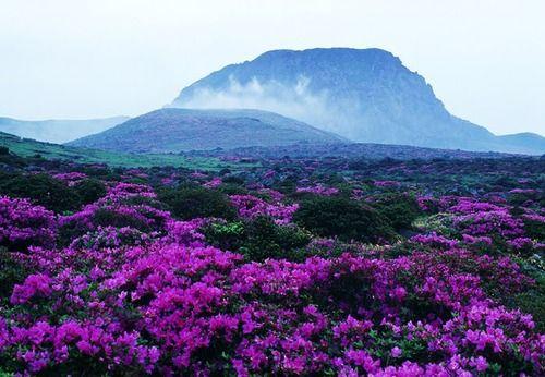 Hallasan National Park Korea National Parks Natural Landmarks Beautiful Places