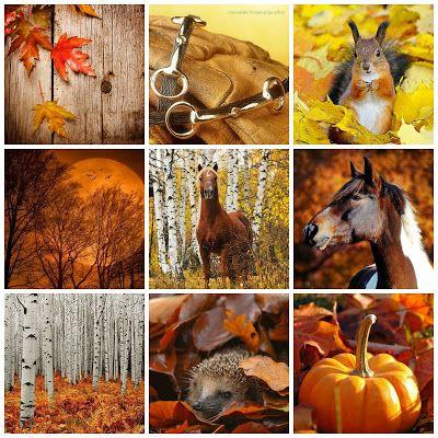 nannasalmi horsehair jewelry: October - the Golden Month Autumn is ok www.nannasalmi.com