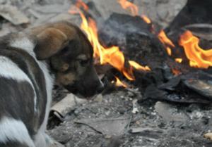 Fiaccolata a Biella per i cani dell'Ucraina