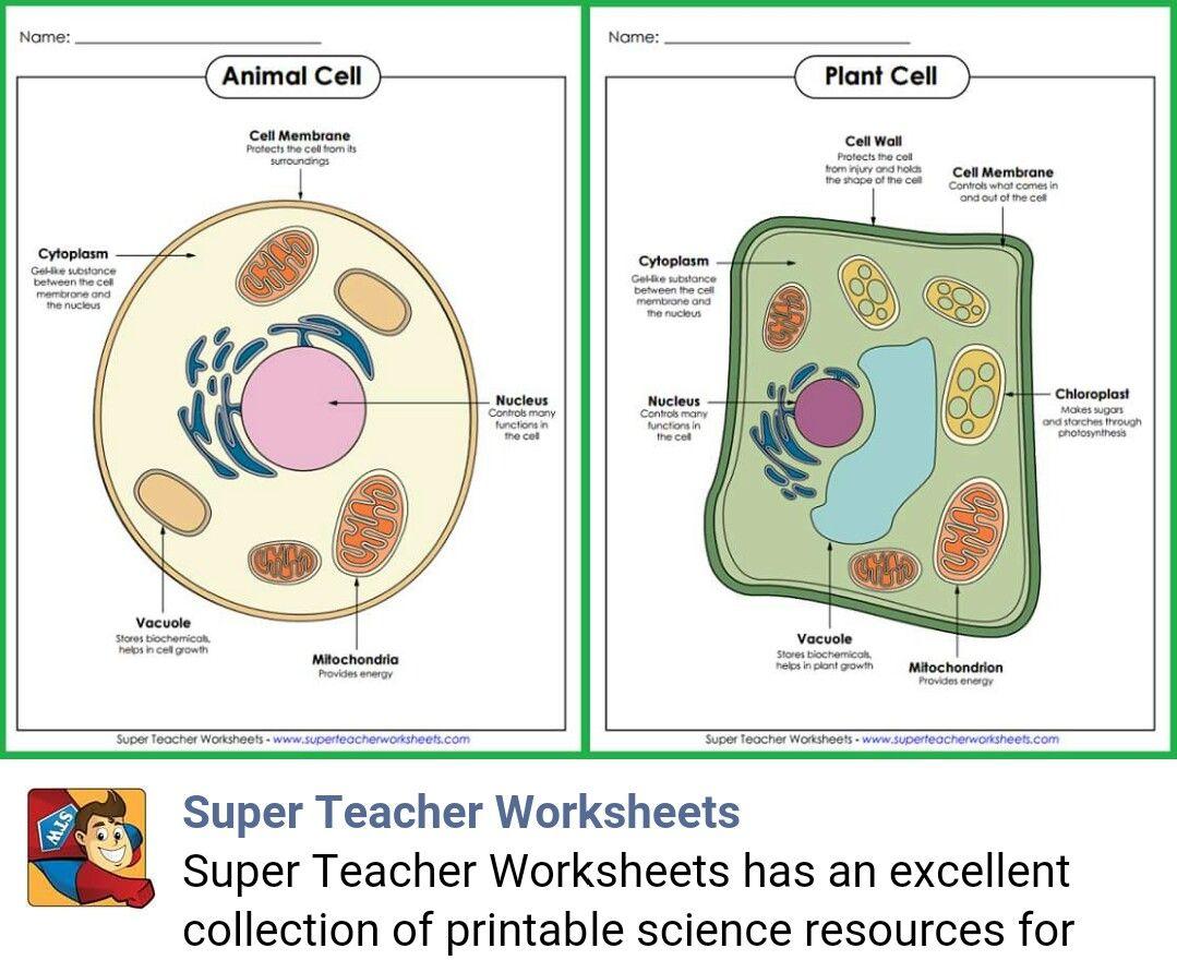 Animal Vs Plant Cell Diagram Pool Light Transformer Wiring Prentice Hall Science Worksheets Best