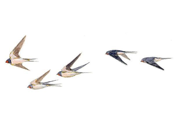 Pajaros Volando Silueta - Buscar Con Google
