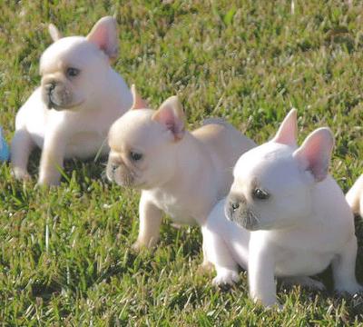 Triplets! ah!! :)