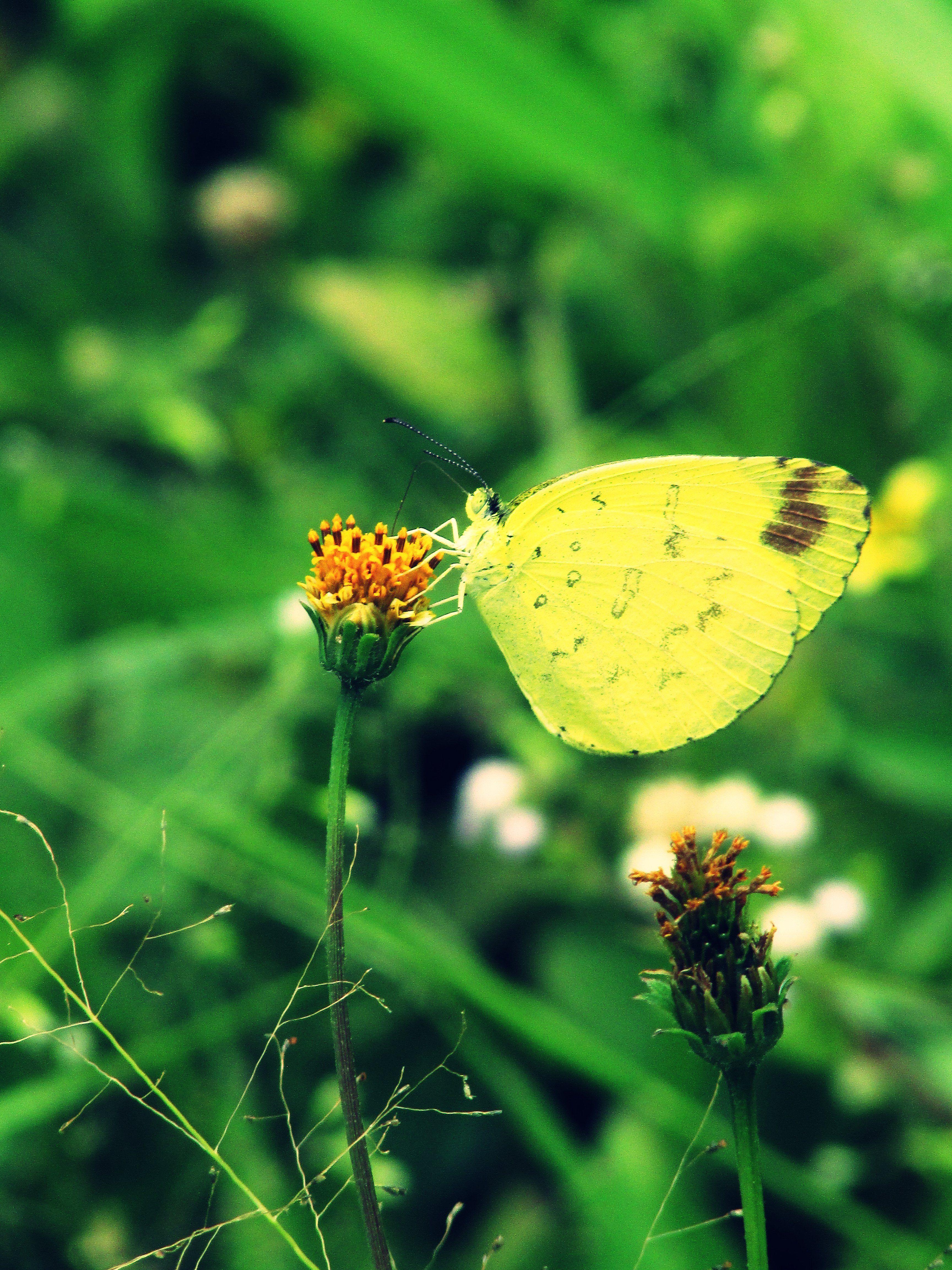 Pin By Jukie Alamsyah On Tentang Bunga Pinterest