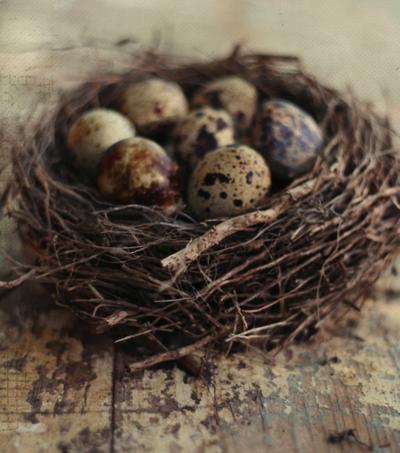 Nature S Art Never Duplicated Bird Eggs Bird Nest Beautiful Birds