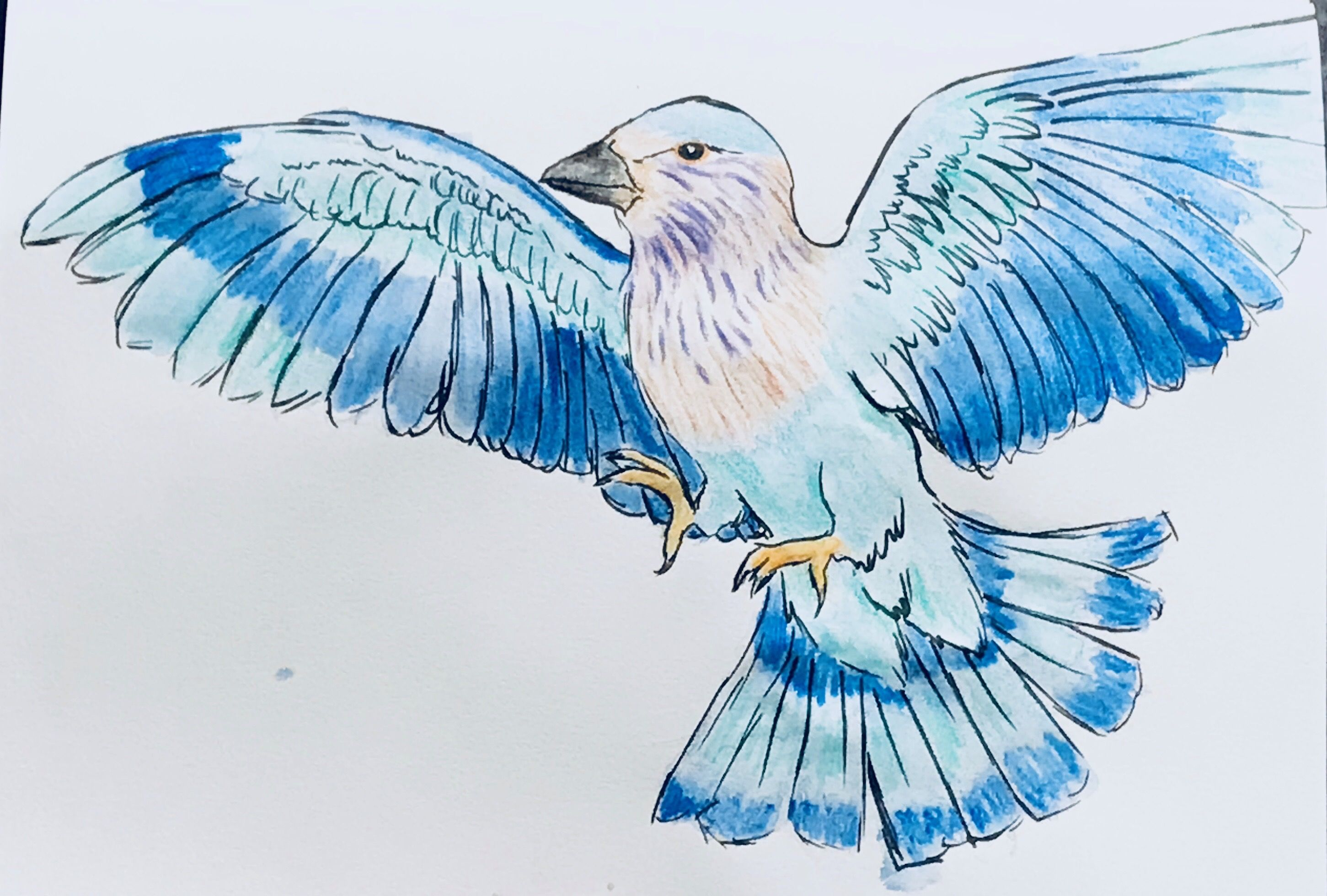 An Indian Roller. #mightcoulddrawtoday #birds #watercolor #drawing ...