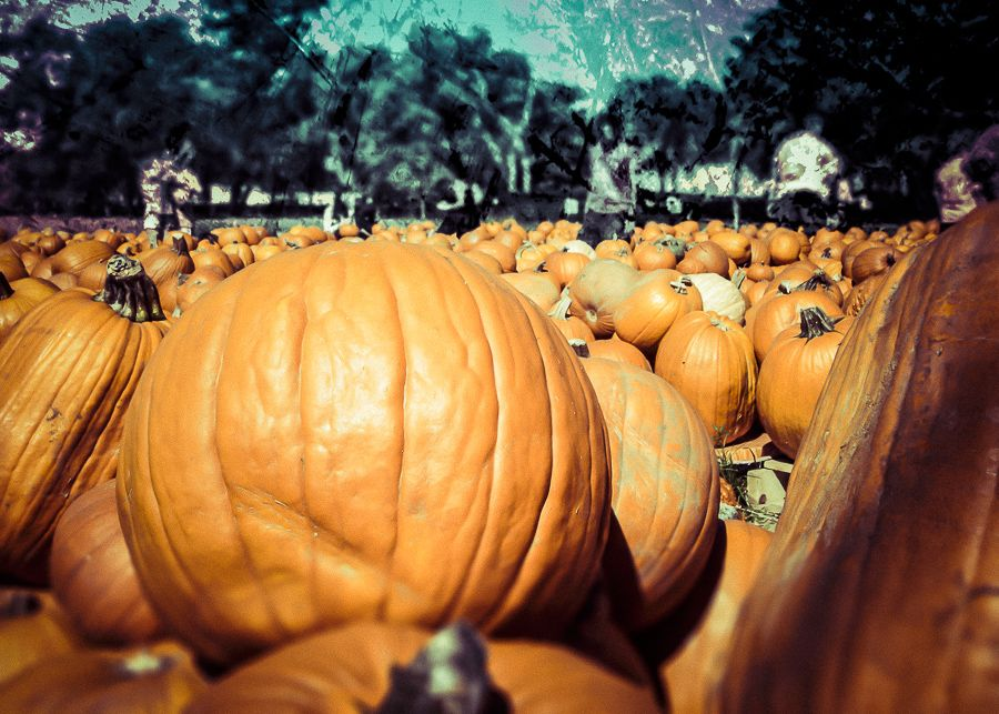 """""""Pumpkin Patch"""" from ThinkFast Photography... thinkfast.net"""