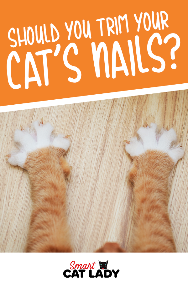 Should You Trim Your Cat S Nails With Images Cat Nails Trim Cat Nails Cat Mom