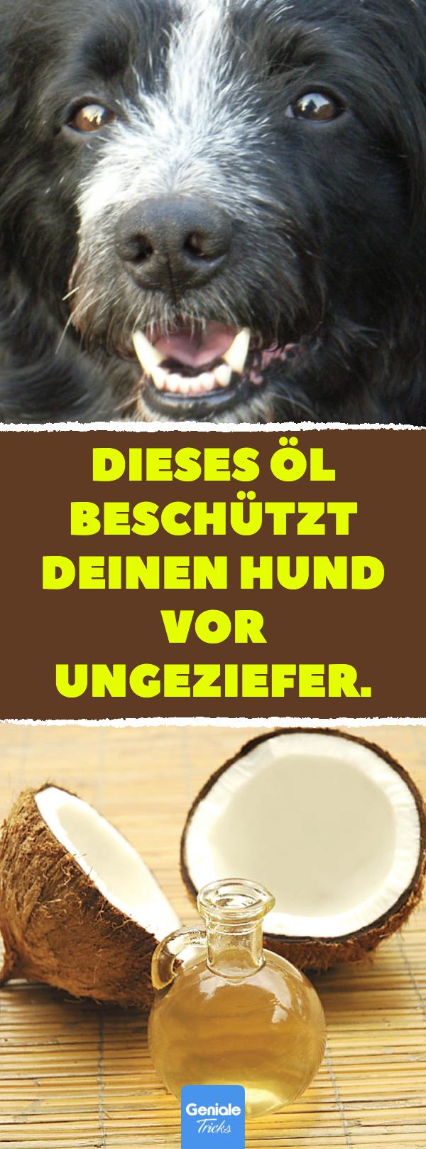 Dieses Ol Beschutzt Deinen Hund Vor Ungeziefer Mit Diesem Hausmittel Zecken Und Flohe Von Deinem Hund Fernhalten Gesundheit Kok Ungeziefer Hunde Flohe Hund