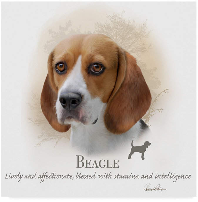 Beagle Dog Price How Much Does They Cost Why Beagle Dog