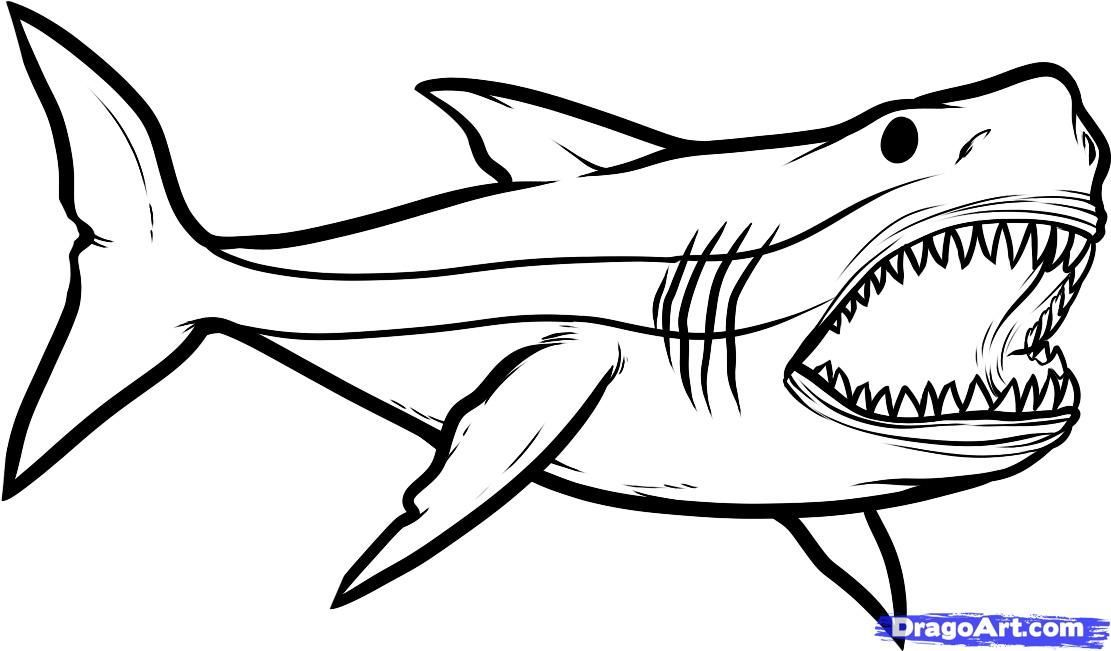 Great White Shark coloring page from Great white shark category ...