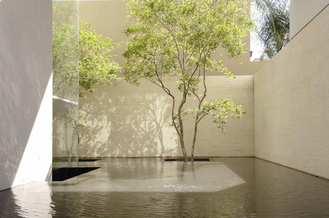 Plantas sensacionales para jardines modernos ideas para for Diseno de fuente de jardin al aire libre