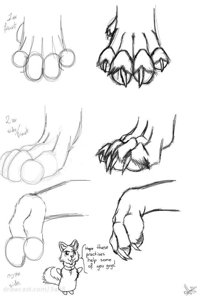 How to Draw Wolf Paws - DrawingNow