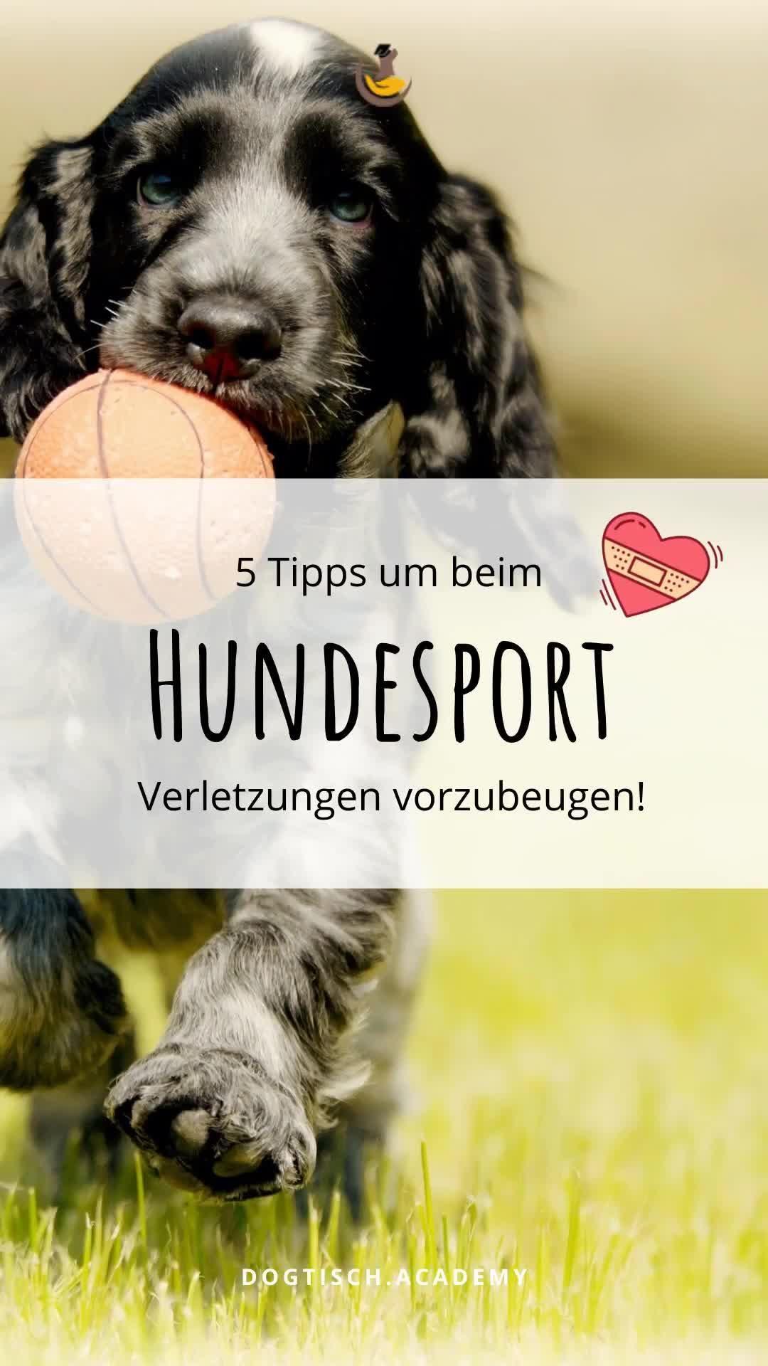 Pin Auf Dein Weg Mit Hund Hundetraining Und Beschaftigung