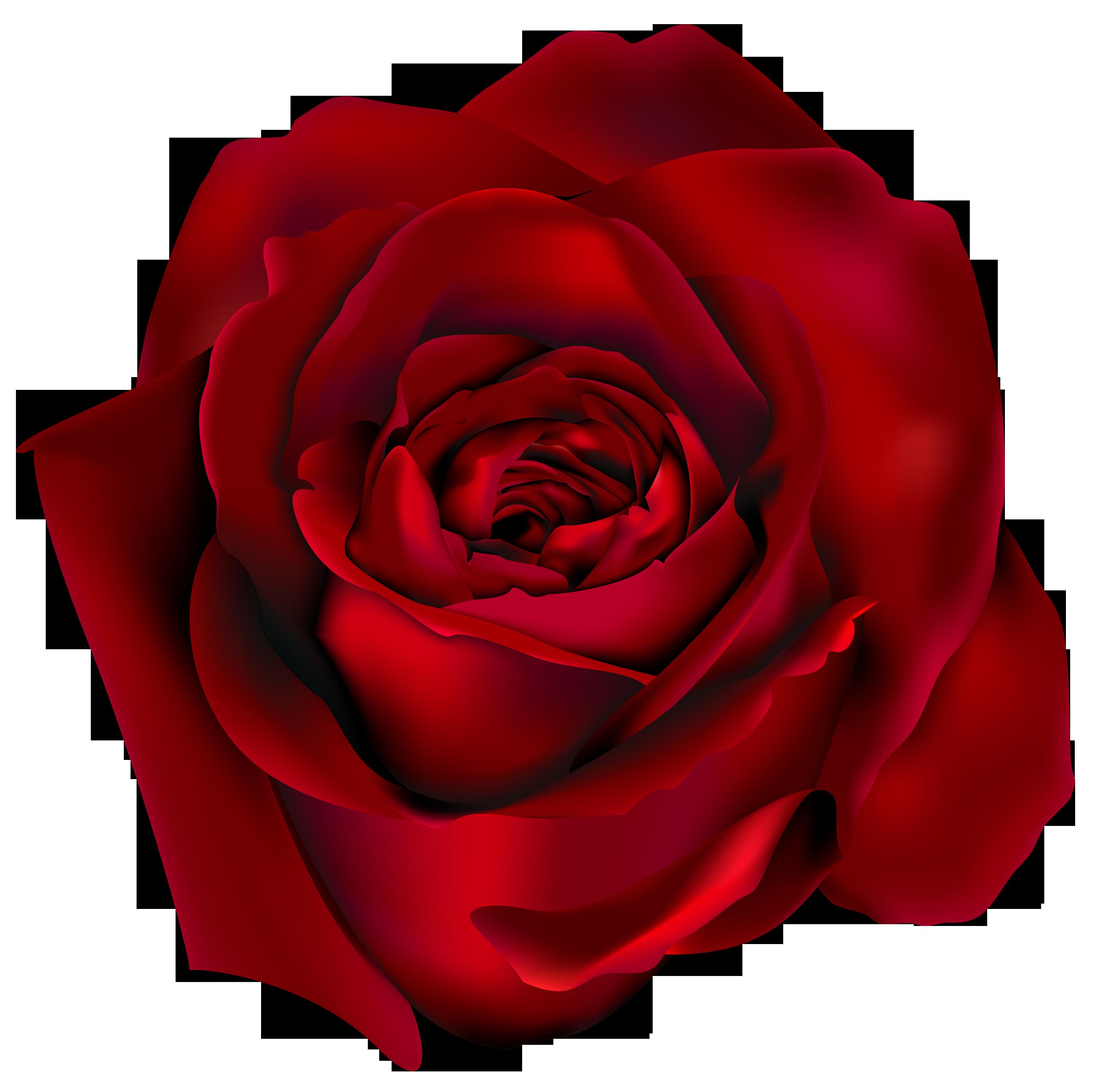 Pin Di Jaihwang Su Kliparty Png 1 Rosa Rossa Disegni Di Rose Rose Rosse