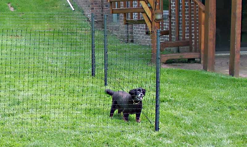 Wire Fence For Pets | Small Dog Fence | Dog Fencing Options