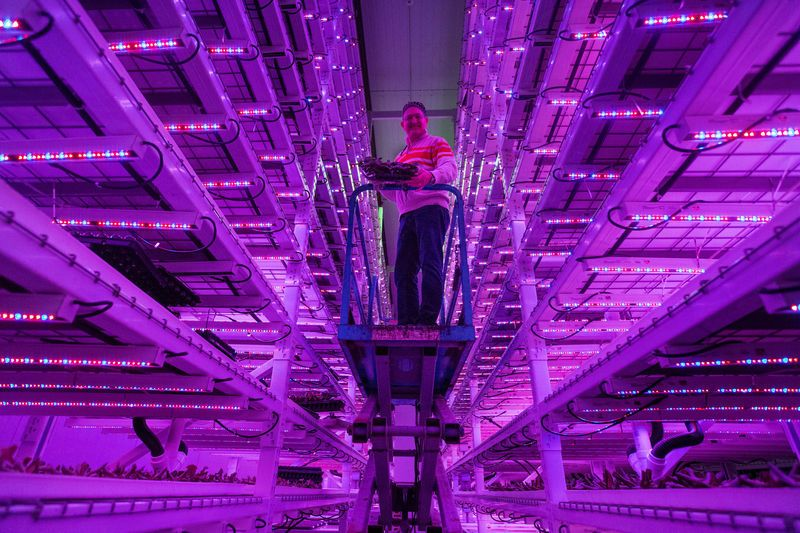 Ivy Tech and Green Sense partner on a 'vertical farm' in