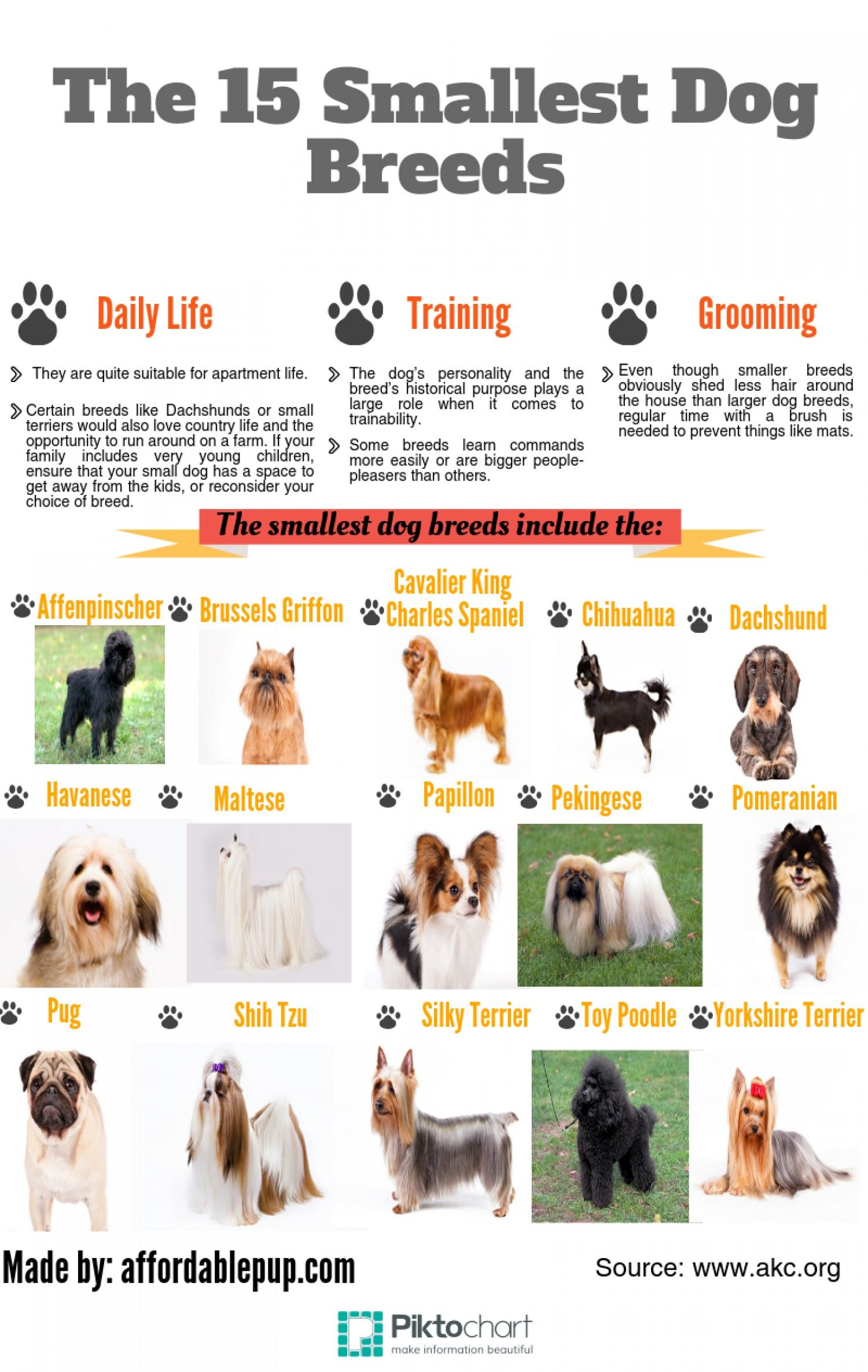 The 15 Smallest Dog Breeds Infographic Dog Breeds Dogs Small