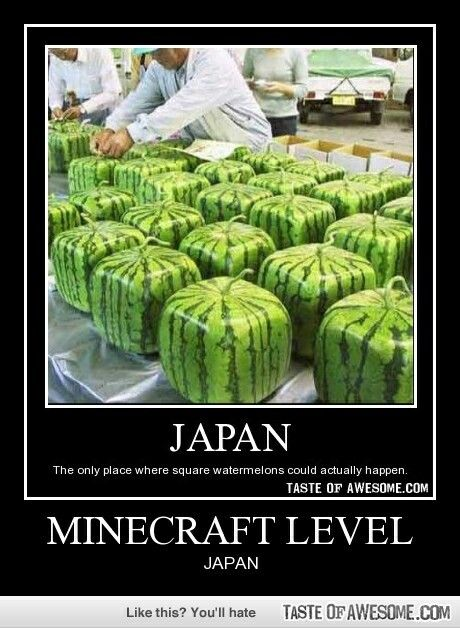 Small Garden Minecraft Ideas: How To Grow Watermelon