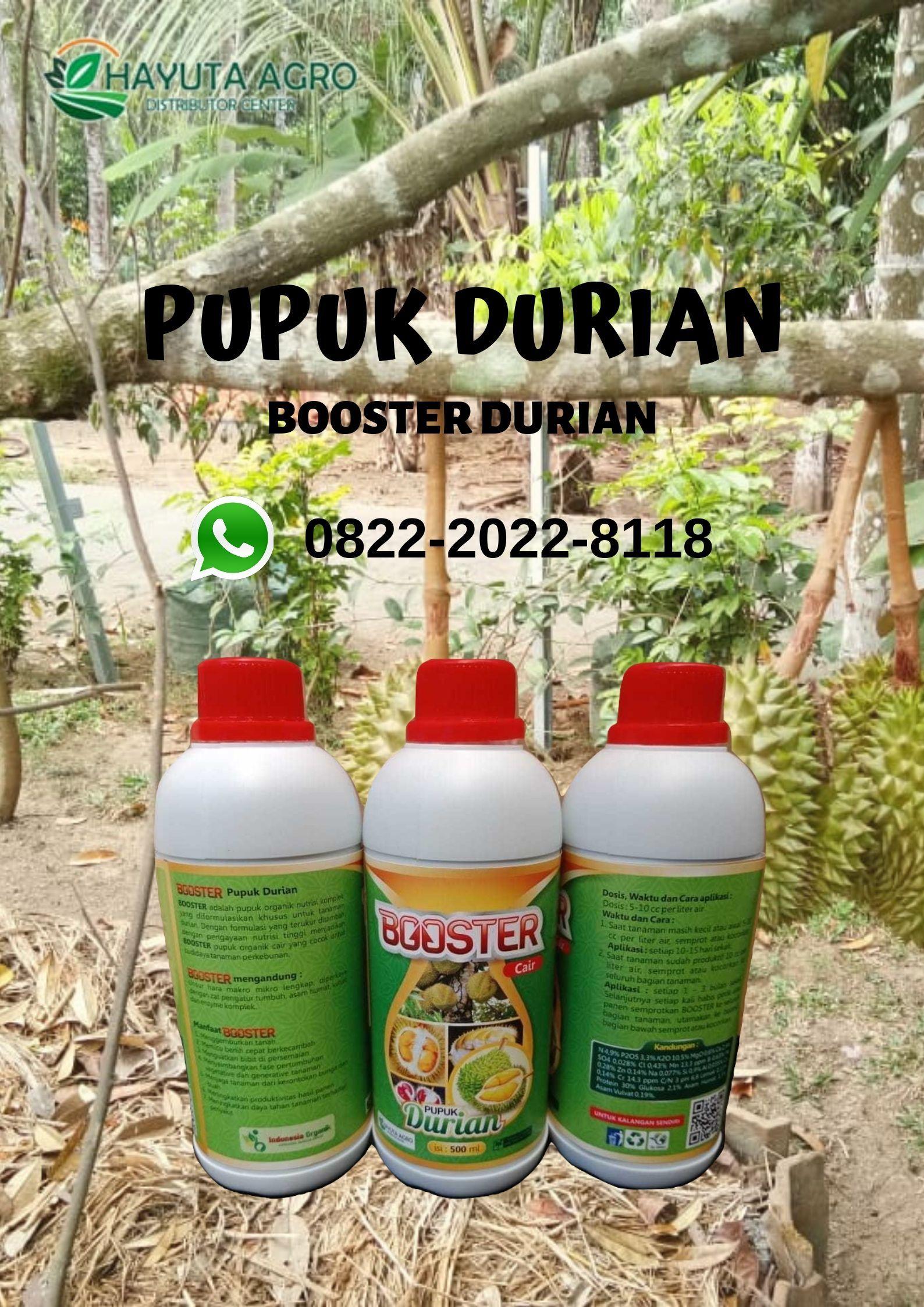 Berkualitas Wa O822 2o22 8ii8 Jual Pupuk Durian Berbuah Di Luar Musim Di Makassar Buah Tanaman Empati