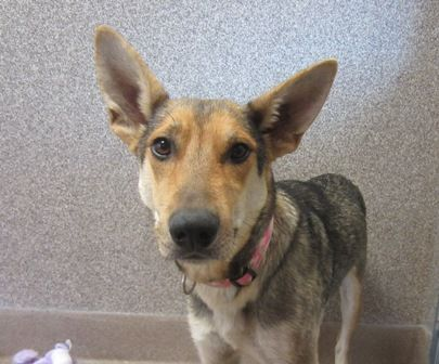 I Love These Ears Madonna Is At The Edmonton Humane Society Right