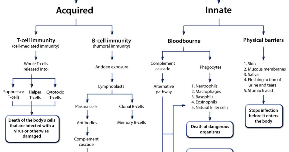 Immune system flow chart on Meducation | nursing | Pinterest ...