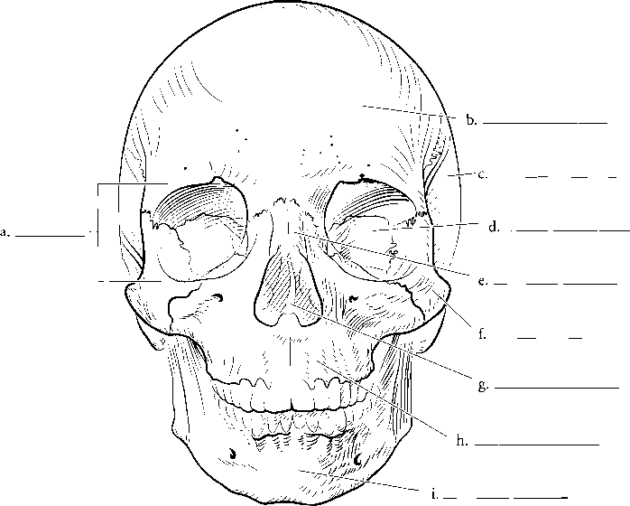 Coloring Rocks Skull Anatomy Skull Coloring Pages Pirate Coloring Pages